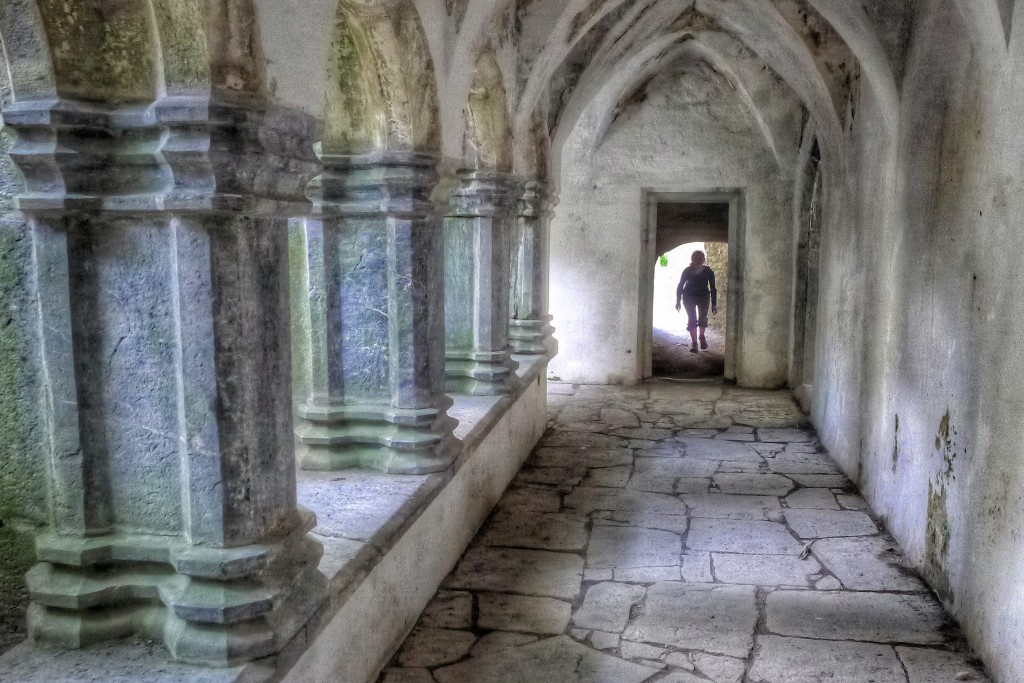 Killarney National Park is also home to an old abbey. This abbey had a beautiful inner cloister.